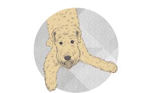 CARLOS the DOG